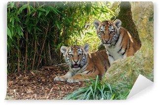 Vinylová Fototapeta Dva Rozkošný Amur Tiger Cubs skrývá v úkrytu