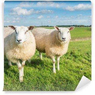 Vinylová Fototapeta Dva zvědavě díval ovce