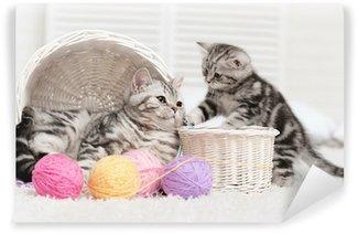 Vinylová Fototapeta Dvě kočky v košíku s míčky příze