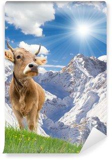 Vinylová Fototapeta Dvě krávy