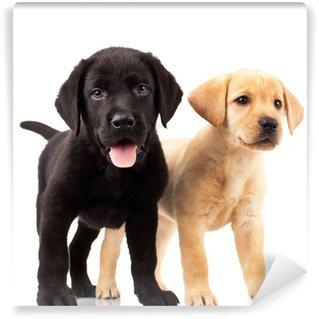 Vinylová Fototapeta Dvě roztomilé labrador štěňata
