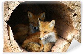 Vinylová Fototapeta Dvojče Fox skryté v dutina žurnál