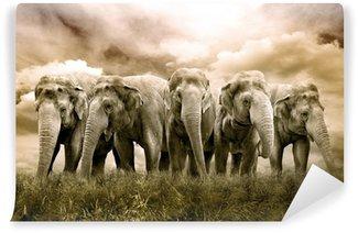 Vinylová Fototapeta Elephant Herd