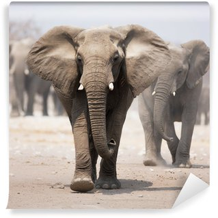 Vinylová Fototapeta Elephant stádo