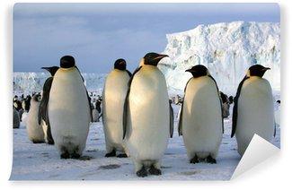 Vinylová Fototapeta Emperor Penguins