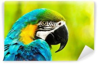 Vinylová Fototapeta Exotické barevné africké papoušek papoušek