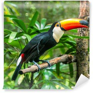 Vinylová Fototapeta Exotické papoušci sedí na větvi, volně žijících živočichů