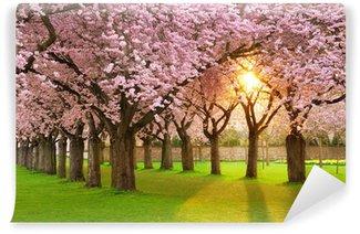 Vinylová Fototapeta Fascinující na jaře scéna ve večerním slunci