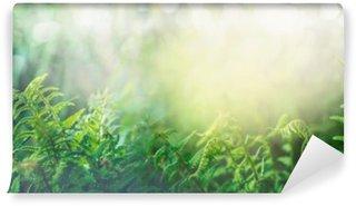 Vinylová Fototapeta Fern v tropické džungli lese se sluneční světlo, venkovní přírodní pozadí, poutač