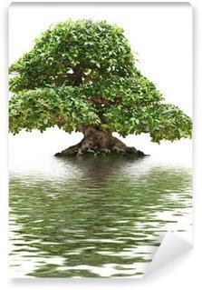 Vinylová Fototapeta Ficus bonsai s vodou reflexe