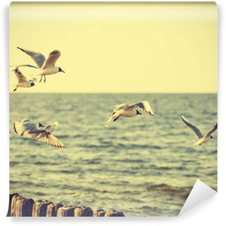 Vinylová Fototapeta Filtrované Vintage Retro Stylu ptáky na moře.