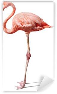 Vinylová Fototapeta Flamingo na bílém