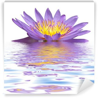 Vinylová Fototapeta Fleur lila de Nymphea