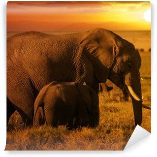 Vinylová Fototapeta Forest slon s lýtku při západu slunce