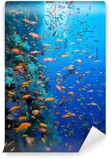 Vinylová Fototapeta Foto korálové kolonie a potápěče