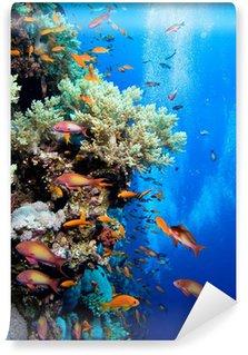 Vinylová Fototapeta Foto korálové kolonie
