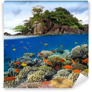 Vinylová Fototapeta Fotografie z korálového kolonie na útesu nad