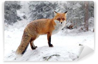 Vinylová Fototapeta Fox v lese na Vysoké Tatry, Slovensko