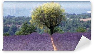 Fototapeta Winylowa Francja Prowansja Lawenda pola Drome