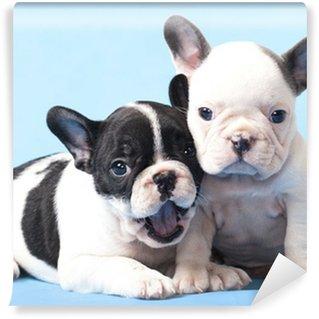 Vinylová Fototapeta Francouzské Bulldogs štěňata