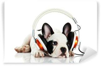Vinylová Fototapeta Francouzský buldoček s sluchátka na bílém pozadí