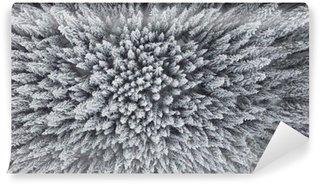 Vinylová Fototapeta Frozen borovice lesní ze vzduchu