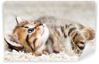 Vinylová Fototapeta Funny kotě v koberci