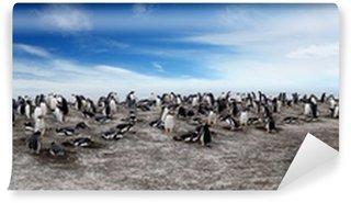 Vinylová Fototapeta Gentoo Penguin Colony on Sea Lion Island