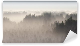 Fototapeta Vinylowa Gęsty las sosnowy w porannej mgle.