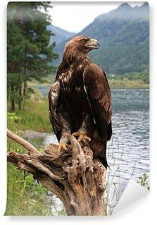 Vinylová Fototapeta Golden Eagle