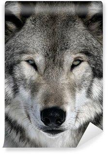 Vinylová Fototapeta Gray Wolf