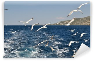 Vinylová Fototapeta Hejno racků létání nad mořem za loď