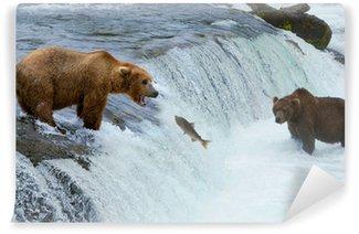 Vinylová Fototapeta Hnědý grizzly medvěd lov lososů na řece, Aljaška, Katmai