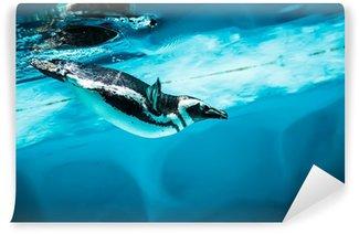 Vinylová Fototapeta Humboldt Penguin - (Spheniscus humboldti)