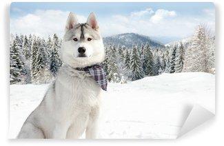 Vinylová Fototapeta Husky v zimě