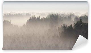 Vinylová Fototapeta Hustý borový les v ranní mlze.