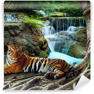 Vinylová Fototapeta Indočína tygr ležel s relaxační pod banyantree proti bea
