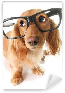 Vinylová Fototapeta Inteligentní štěně