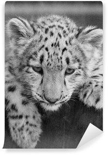 Vinylová Fototapeta IRBIS, sněžný leopard (Panthera uncia)