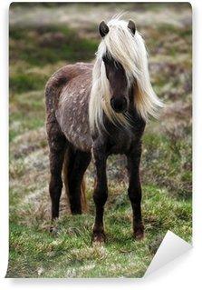 Fototapeta Winylowa Islandia koń