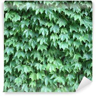Vinylová Fototapeta Ivy na pozadí