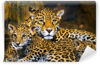 Vinylová Fototapeta Jaguar Cubs