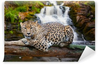 Vinylová Fototapeta Jaguar má odpočinek proti pádu
