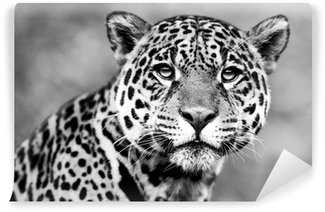 Vinylová Fototapeta Jaguar - Panthera onca