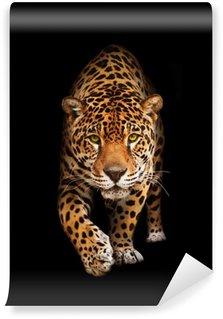 Vinylová Fototapeta Jaguar ve tmě - front view, ojedinělých
