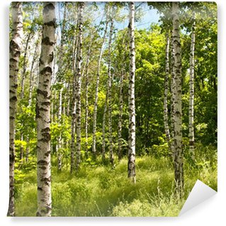 Vinylová Fototapeta Jarní les