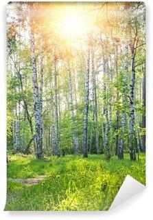 Vinylová Fototapeta Jarní slunečné les