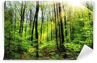Vinylová Fototapeta Jarní sluníčko v bukovém lese