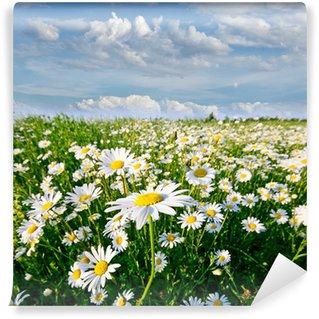 Vinylová Fototapeta Jaro: pole s květinami daisy modrou oblohu a mraky