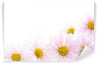 Fototapeta Winylowa Jasnoróżowe kwiaty chryzantemy si?